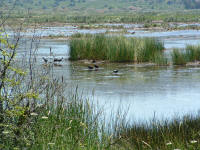 Wetlands in the Mugla province near bodrum
